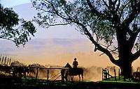 Cowboy working the cattle herd on Parker Ranch, Waimea (Kamuela), Island of Hawaii