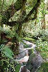 Cascade, Oparara Arch Track, Kahurangi NP, New Zealand