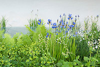 Fresh spring garden with blue irises, euphorbia, heuchera, with white background