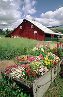 RED BARN & FLOWERS -  OREGON FARM