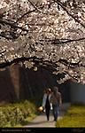 Couple on Path Enjoying Okawa River Sakura Festival Osaka Japan