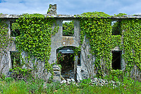 Abandoned derelict house in need of renovation, covered in ivy and other creepers in Co. Wexford, Ireland