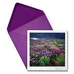 Wildflower Carpet<br />