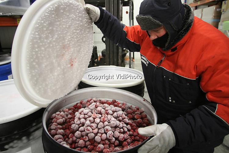 Foto: VidiPhoto..DODEWAARD - Buiten is het ruim 30 graden Celsius. Binnen heeft een medewerker van Geurts' Conserven uit Dodewaard donderdag een ton met Spaanse aardbeien 'kaltgestellt'. Zonder koudebestendig pak is het bij een temperatuur van min 20 onwerkbaar in de vriescel. Bij de Dodewaardse conservenfabriek is het nu hoogseizoen. Vruchten uit de hele wereld voor de jaarlijkse produktie van 25 miljoen potten jam en appelmoes worden nu ingekocht. Geurts levert aan de grote Nederlandse retailers.