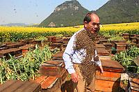 Luoping, Yunnan. Monsieur Yang Chuan dans le rucher pendant son spectacle réalisé pour promouvoir les apiculteurs installés à Jinji Lin pour le programme de la chaine CCTV 4 de la télévision nationale.///Luoping, Yunnan. Mister Yang Chuan in his apiary during a show to promote the beekeepers set up in Jinji Lin, filmed for a program on the national television's Channel CCTV 4.
