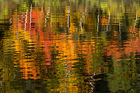 &quot;Fall Color Abstracts I&quot;<br />