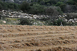 A shepherd leads his herd of sheep through Adolam Park, Israel. The park is located in the region that is planned to be drilled for shale oil by IEI.