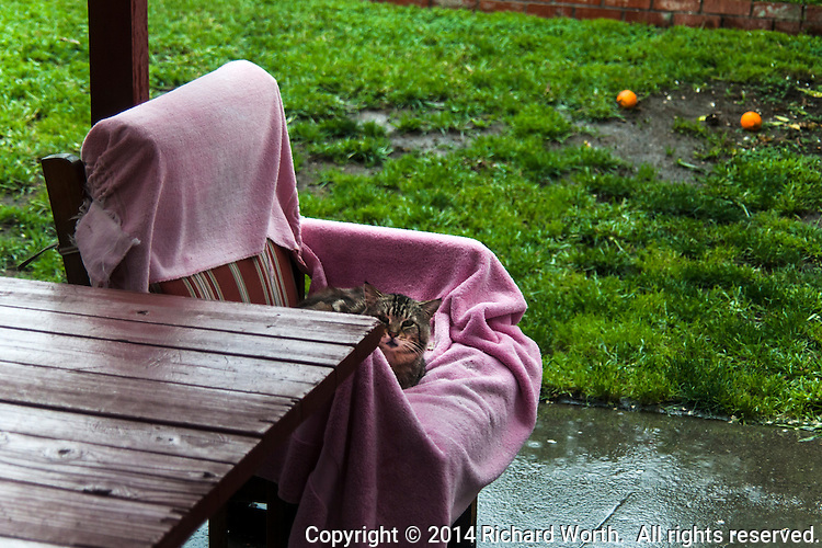 A neighborhood cat finds refuge from a spring rainstorm.