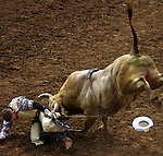 A bull rider gets the horns after falling off during the St. Paul Rodeo.