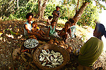 Women with children around a fire with coconuts and sardines at Bagaman Island in the  Louisiade Archipelago..The Louisiade Archipelago is a string of ten larger volcanic islands frequently fringed by coral reefs, and 90 smaller coral islands located 200 km southeast of New Guinea, stretching over more than 160 km and spread over an ocean area of 26,000 km  between the Solomon Sea to the north and the Coral Sea to the south. The aggregate land area of the islands is about 1,790 kmu178  (690 square miles), with Vanatinai (formerly Sudest or Tagula as named by European claimants on Western maps) being the largest..Sideia Island and Basilaki Island lie closest to New Guinea, while Misima, Vanatinai, and Rossel islands lie further east..The archipelago is divided into the Local Level Government (LLG) areas Louisiade Rural (western part, with Misima), and Yaleyamba (western part, with Rossell and Tagula islands. The LLG areas are part of Samarai-Murua District district of Milne Bay. The seat of the Louisiade Rural LLG is Bwagaoia on Misima Island, the population center of the archipelago. .The Louisiade Archipalego is part of the Milne Bay province of Papua New Guinea..It lies between approximately 10 degrees south and 11.5 degrees south, and 151 degrees east and 154 degrees east. It is an area of Islands, reefs and cays some 200 nm long and 50 nm wide, stretching from the south east tip of mainland Papua New Guinea in a east south east direction..