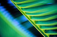 Close up of a palm leaf.