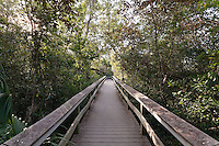 A wooden plank walkway through dense vegetation in Mahogany Hammock, Everglades National Park, Florida.
