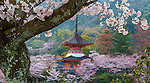 Cherry blossoms surround the Mitaki-dera Temple, Hiroshima, Japan