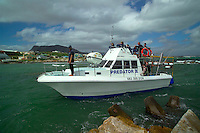 GANSBAAI, SOUTH AFRICA, DECEMBER 2004. The Predator II shark watching boat returns to base. Brian Mc Farlane organises Great White Shark cage diving tours out of Gansbaai. Gansbaai is one of the best places in the world to see the Great white in its natural habitat. Photo by Frits Meyst/Adventure4ever.com