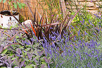 Herb Garden with English lavender - Lavandula angustifolia, Culinary Sage - Salvia officinalis - Phormium, charming rustic rusting bread antique, wicker wall