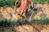 During the dry season the Mekong River recedes leaving fertile soil exposed. Pentax Spotmatic film camera. 2004