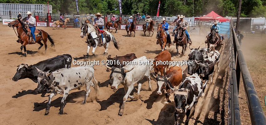 Simcoe RAM Rodeo  -- 16&amp;17 Jul'16<br /> photos by Norm Betts<br /> normbetts@canadianphotographer.com<br /> &copy;2016, Norm Betts, photographer<br /> 416 460 8743