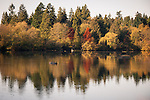 Bright colours and autum reflections on a lagoon. Birds sitting on a log in the water.
