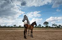 Don Jose Luis Bonilla Lizalde´s Cattle ranch Hacienda El Sauz in de Saín Alto, Zacatecas, Mexico