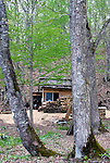 The ranger's hut inside the C.W. Nicol Afan Woodland Trust, native woodland that Nicol began buying up 25 years ago, near his home in Kurohime, Nagano Prefecture, Japan on 10 May 2010..Photographer: Robert Gilhooly