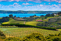 New Zealand-Auckland-Waiheke Island
