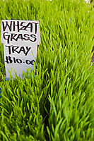 Fresh Wheat Grass,Produce, Farmers Market,