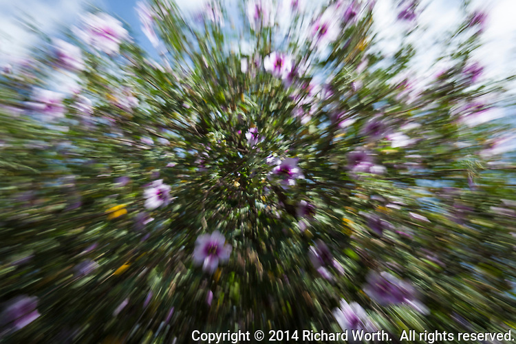 A flowering bush seems to by flying in this abstract photograph.