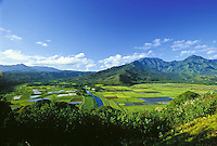 Hanalei Valley taro fields and Hanalei River from overlook, Hanalei National Wildlife Refuge, North Shore, Kauai; habitat for endangered waterbirds