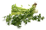 Chinese Common Celery still life.
