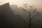 Tree silhouette against foggy mountan landscape nature scenery at Tianmen Mountain National Park, Zhangjiajie, Hunan, China