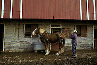 An old fashioned farmer prepares to harvest hay, with wagon team of Belgian draft horses. Lancaster PA Pennsylvania