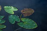 &quot;STAGES OF LIFE&quot;<br />