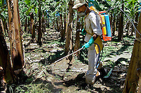 A Costa Rican worker spraying chemicals used for maintenance of plants on the banana plantation near Puerto Limon, Costa Rica, 2 September 2004. Eighty percent of the exported bananas in the world are grown in Latin America. Local farms have no other alternative than to sell for a price offered by the multinational company. When working conditions and ecology is in question, the corporations do not have any responsibility as they do not own plantations. Local governments in the attempt of organizing banana export provide low duty taxes on export, they try to eliminate social and enviromental politics to attract the big companies to their countries.