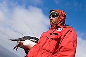 Scientist holds an Adelie Penguin with splash tag and a radio transmitter, Antarctica.