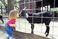 Toddler kisses goat