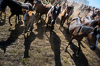 Wild horses are herded down from the mountains for the annual Rapa das Bestas (Shearing of the Beasts) festival in Torroña, Spain, 5 June 2011. The herds of of wild horses roam freely the hills of Galicia in the north-western Spain. Each year, in the beginning of summer, villagers herd horses down from the higher ground, rounding them up in the curro, a centuries-old stone arena. Here, ranchers catch the animals one by one and shear their manes and tails. Some of the young men, showing up their strength and courage, fight the untamed horses just with their bare hands. At the end of Rapa das Bestas, a 400-year-old Spanish tradition, the newborn foals are branded and all horses are released back into the wilderness.