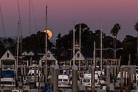 November 13, 2016, the full moon, Super moon or Beaver moon, climbs up through the trees and over the boats moored at the San Leandro Marina on San Francisco Bay.