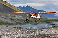 Bush pilot Dirk Nickisch of Coyote Air, approaches a landing strip in his De Havilland Beaver, along the Canning River, Arctic National Wildlife Refuge, Brooks range mountains, Alaska.