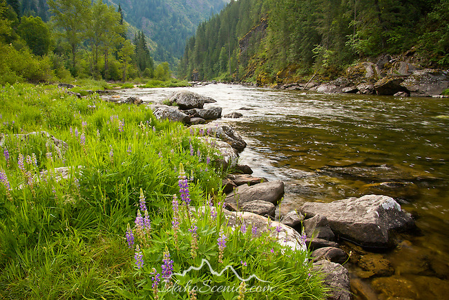 Kelly Creek River in Clearwater County Idaho