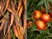 Carrots and Tomatoes by Laura Berman- GreenFuse Photos.