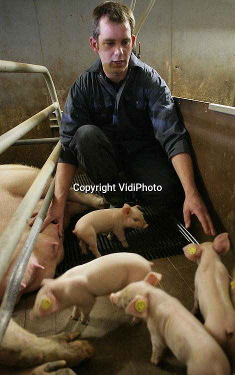 Foto: VidiPhoto..NEERLOON - Dierenarts John van der Wielen aan het werk tussen de varkens van een varkenshouder in Neerloon.