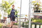 FREE TO USE PICTURE BY CHRIS BULL FOR ROYAL HORTICULTURAL SOCIETY <br /> Preparations are under way today (Wed 15th July) for the RHS Flower Show at Tatton Park which opens its doors on Wednesday 22 July and will run until Saturday 25th July.<br /> Jackie Sutton , owner of Jackie Knight gardens (her maiden name) from Formby. Pictured preparing her garden called Nature's Reflections.<br /> <br /> <br /> Further info from RHS PR-<br /> aimeereilly@rhs.org.uk 07739 630705<br /> edhorne@rhs.org.uk  07776193226<br /> siobhanmacmahon@rhs.org.uk