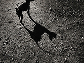 Europe, Italy, Lombardy, Sondrio, Valle, Valley, di, Mello, dog, shadow, street photography