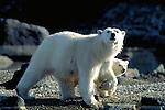 Spiztbergen / Svalbard