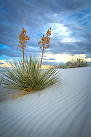 Pastel White Sands - New Mexico - White Sands National Monument