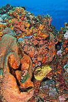 Reef scenic<br /> Yellow Reef, Isla Desecheo<br /> Puerto Rico
