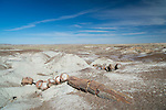 Partially covered and broken, the petrified log of a tree is scattered in the desert of the Petrified Forest National Park