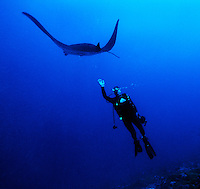 """Diver with Ray, Palmyra Atoll. The largest purchase to date for the Nature Conservancy is the Palmyra an atoll situated about 300 miles north of the equator.  Palmyra has five times as many coral species as the Florida Keys and three times as many as Hawaii.  It is home to the world's largest invertebrate, the rare coconut crab, and a population of red-footed booby birds second only to that of the Galapagos.  It is the last marine wilderness area left in the U.S. tropics and is home to the last remaining stands of Pisonia grandis beach forest in the world.  Palmyra was a US Navy supply base in World War II, the site of a proposed nuclear waste dump, an unsuccessful coconut plantation and of various development schemes.  Palmyra is most famous for the 1974 slaying  of a married couple which became the subject of the best-selling book """"And the Sea Will Tell,"""" by Vincent Bugliosi."""