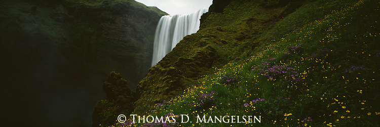 Wildflowers grow underneath Skogafoss or Forest Falls in Iceland.