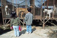 Korea. South Korea. Kimje area. Wonpyong. Dog market for dog meat. A pair of children look at the dogs. They are in cage waiting to be bought by a dog meat retailler. Dog meat is a delicatessen of korean traditionnal cooking. © 2002 Didier Ruef
